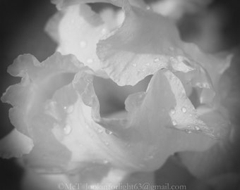 Flower Photo Art, Iris Photo, Black & white Floral Photo, Abstract, Macro Floral Photo, Abstract close up view of an Iris, O'Keefe inspired.
