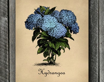 Hydrangea Print -  PRINTABLE Vintage Botanical Wall Art - Blue Hydrangeas Poster - Floral Decor - Blue Floral Print Gifts - Kitchen Art