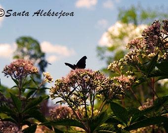 Butterfly - Fine Art Photography Print - photography print 8x12, butterfly photo print, butterfly on flower photo, butterfly photography