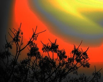 Colorful Skies (1) Nature Photography, Landscape Photography, Wall Art Print, Orange Yellow Sunny Sky with Black Tree Top