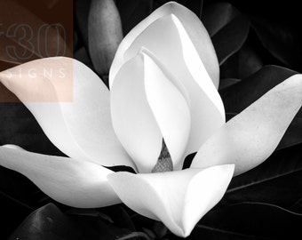 Magnolia Flower print, Black & White Nature Photography