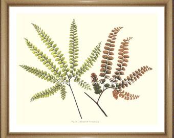 "Fern Print No.30. Botanical Prints. Maidenhair Fern. Fern Wall Art, 8x10"""