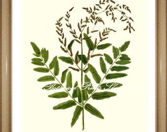 "Fern Print No.32. Botanical Prints. Osmunda regalis. Royal Fern. Fern Wall Art, 8x10"""