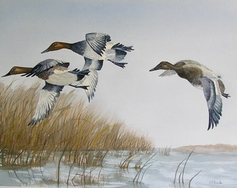 Ducks Landing....Original Watercolor Painting....Large Watercolor