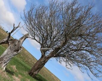 Tree, Sackville, New Brunswick