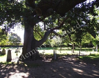 Tree Photography Salem Massachusetts Witch Hunt Old Burying Point Cemetery Tombstones Digital Download