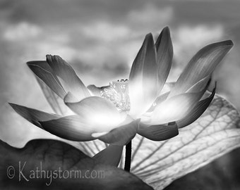 Water Lotus, Flower, Fine Art Nature Photography,  black and white.  Striking wall art for home décor.  FREE SHIPPING!