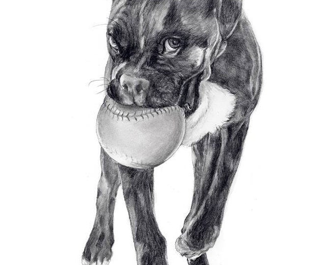 "8"" x 10"" Pencil sketch of your pet from photo"