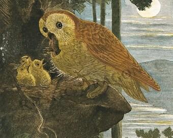 "Johann Baptist Zwecker ""Owls"" 1883 Reproduction Digital Print Mother Owl Babies Nature Print Wall Hanging"