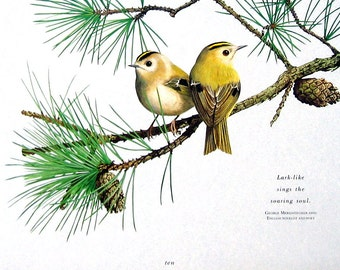 Small Bird Print - Goldcrests - 1992 Vintage Book Page - Bird Print with Quote - 9 x 7