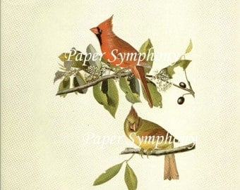 Audubon Common Cardinal Grosbeak for Framing, Collage, Scrapbooking, Paper Arts, Assemblage and MORE PSS 2158