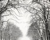 Winter photography, Nature photography, Snow photography, Winter forest, white forest, winter trees, winter print, winter landscape