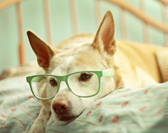 Dog Photography, Pet Photography, Dog Artwork, 5x7 Print, Dog Portrait, Mint Green, Nursery Art, Nursery Decor, Home Decor