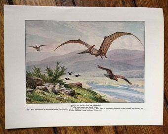 1902 PTERODACTYL ANTIQUE LITHOGRAPH - pterodactyls in flight dimorphodon rare original antique print prehistoric fauna