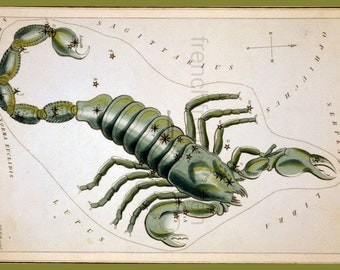 antique lithograph scorpio constellation