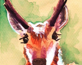 Pronghorn Antelope Watercolor Painting Print, Artist-Signed
