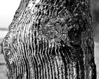 Natural Abstract Fine Art Photography - Woodgrain Close Up on English Beach - Signed Limited Edition Print, Various Sizes and Finish Options