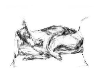 """Whippet Sleeping """"Great Lengths"""" - fine art dog print - Whippet gift"""