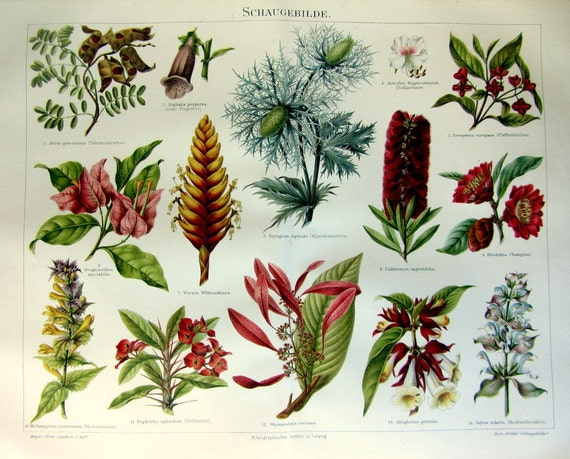fleurs exotiques tropicales 1895 imprimer par lyranebulaprints. Black Bedroom Furniture Sets. Home Design Ideas