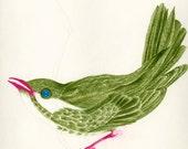 Bird Drawing Fine Art Bird Print Green and White Bird