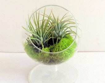 Fairy Air Plant Standing Garden - Indoor or Outdoor Fairy Garden - Fairy Garden Kit - Terrariums - Pot Gardens Stone Cast