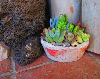 Prestigious rustic garden in handcrafted concrete planter