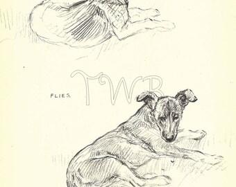 Dog Print,  GERMAN Shepherd Print, Puppy Print, Art Print, Home Decor, Paper Ephemera, Book Page, K.F. Barker, Wall Decor, A-12