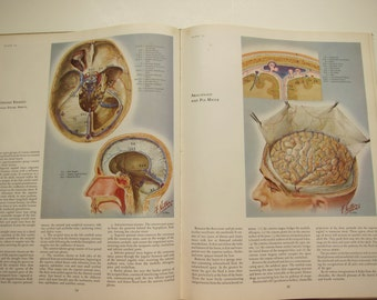 Ciba Medical Illustrations Book, Volume One Nervous System, 1953, Frank Netter