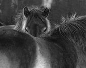 Black and white horse photo, fine art photography, animal photography, 8x8 12x12