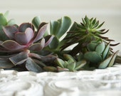 Succulent Garden In Upcycled and Handcrafted Picture Frame Planter