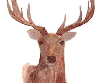 Deer art original watercolour painting deer illustration wildlife animal woodland animal deer painting