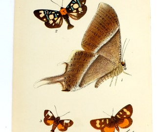 Antique Moths Picture, 1890s, Housewares, Picture of Moths, Vintage Moths, Antique, Lepidoptera