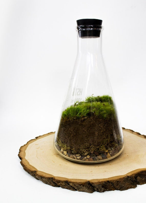 That's Just Science // Moss Terrarium