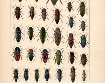 Jewel Beetles, Antique Print, Vintage Lithograph, Buprestidae Beetles, Insects Print, Coleoptera, Metallic Wood-boring Beetles, Bugs