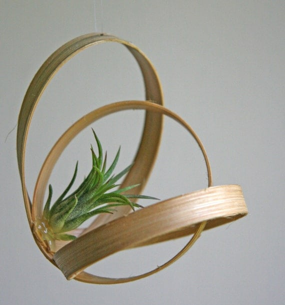 Items similar to air plant art piece on etsy for Air plant art