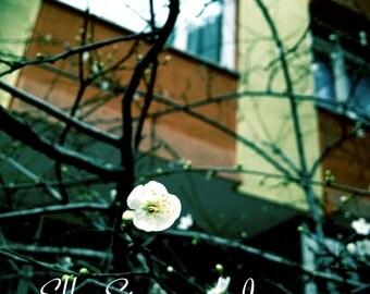 Hope { Print } Fine Art Photography