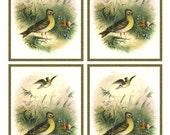 Vintage SINGING SKYLARK BIRD in meadow Framed Image Sheet - Digital Instant Download - nature avian songbird ephemera print collage supply