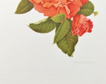 Charles Raymond, Vintage 1950s Botanical Rose Print on High Quality Art Paper, Rosa Gallica Maxima