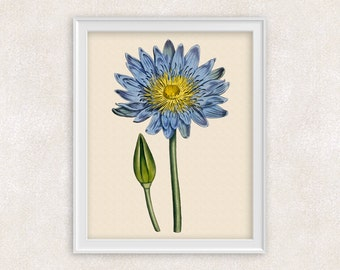 Water Lily Botanical Print - 8x10 PRINT - Blue Lotus Flower Art - Wall Art Prints - Home Decor - Botanical Art Print -  Item #144