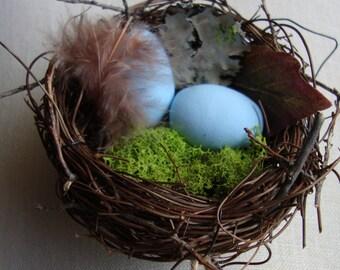 Bluebird of Happiness Nest