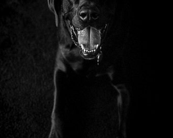 Vintage Black and White Photography Fine Art Print, Black Dog