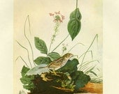 CLEARANCE Vintage Bookplate of Henslow's Sparrow by Audubon