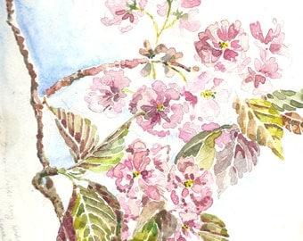 Cherry Blossom Branch print