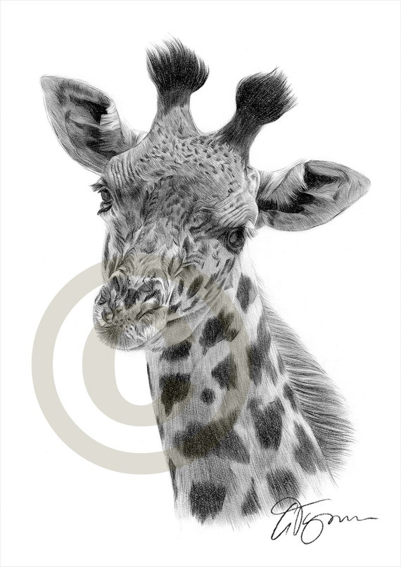 African Giraffe pencil drawing print A4 size artwork Realistic Elephant Drawing
