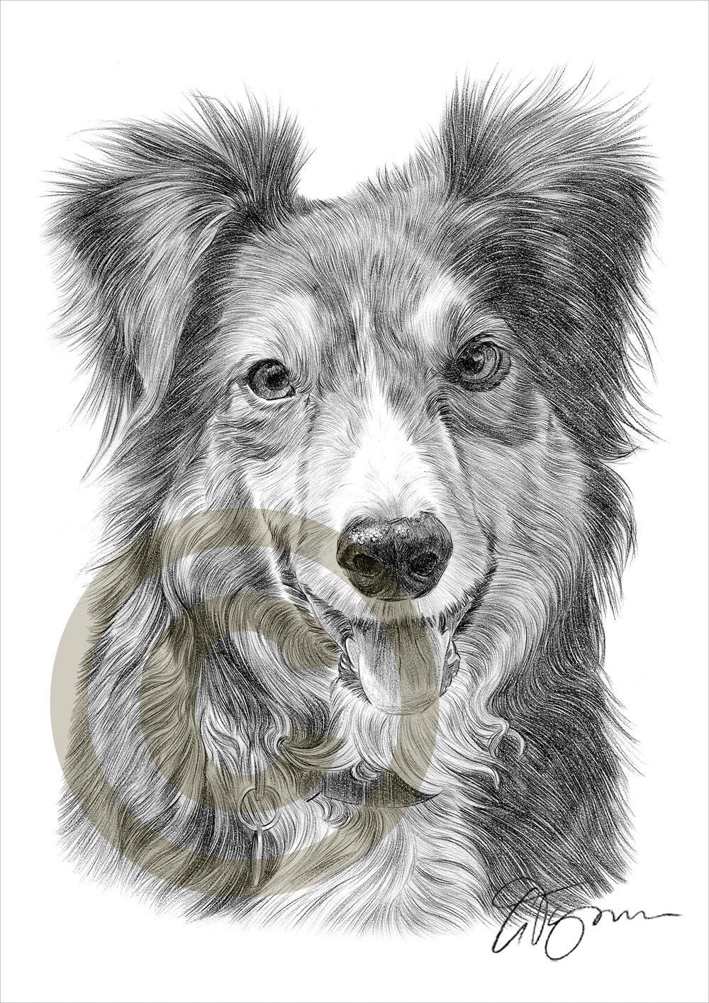 Crayon de border collie chien dessin imprimer oeuvre format - Dessin d un chien ...