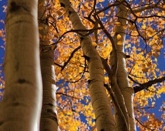 Flourishing Fall