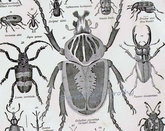 Beetle Bugs Coleoptera VIII 1892 Victorian Entomology Antique Chart Of Insects