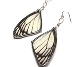 Real Delias Butterfly Wings Earrings - Black and White Dangle Earrrings