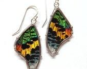 Sunset Moth Wing Earrings - Real Butterfly Jewelry