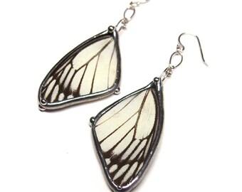 Real Delias Butterfly Wings Earrings - Black and White Dangle Earrrings